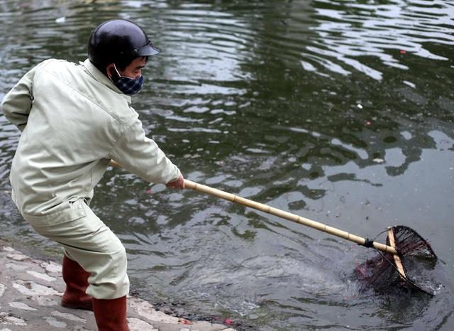 Hà Nội: Cá chép đỏ chết la liệt ở hồ sau khi người dân tiễn Táo quân về trời - Ảnh 2.