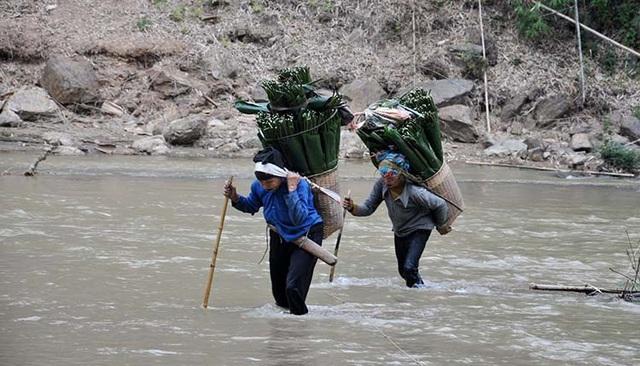 Băng rừng, vượt suối hái lá dong  - Ảnh 1.