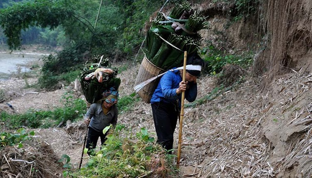 Băng rừng, vượt suối hái lá dong  - Ảnh 2.