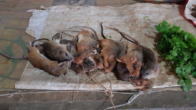 Xuân về, theo chân người dân bản địa săn chuột - Ảnh 7.