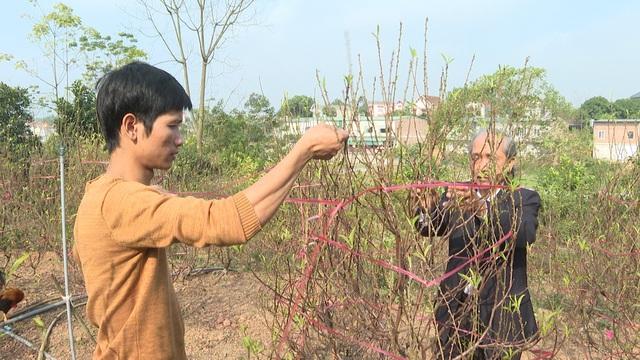 """Bỏ canh tác sắn, dân cả một vùng được ấm no nhờ trồng """"cây gọi Tết"""" - Ảnh 5."""