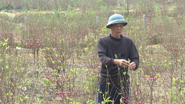 """Bỏ canh tác sắn, dân cả một vùng được ấm no nhờ trồng """"cây gọi Tết"""" - Ảnh 4."""
