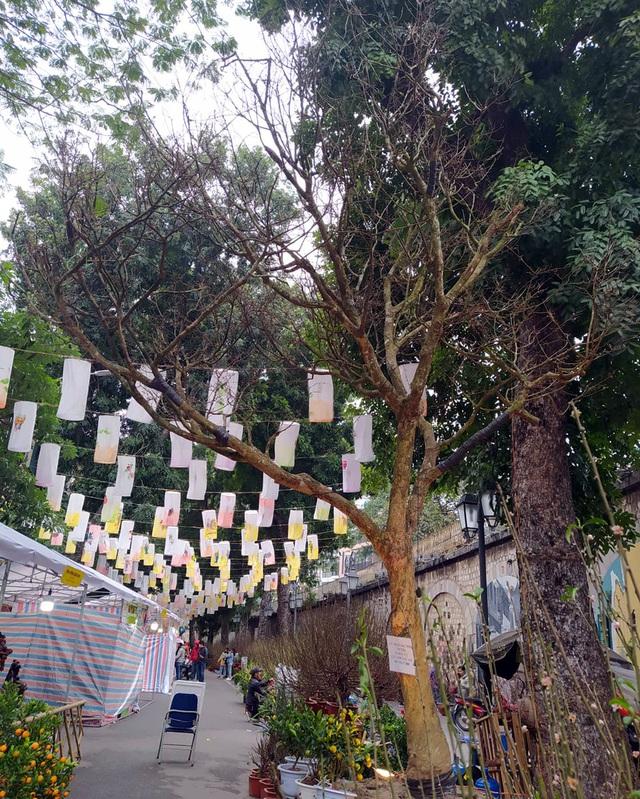Hoàng hồn khi cây hoàng mai thơm tựa củi khô giá bằng siêu xe ở Hà Nội - Ảnh 1.