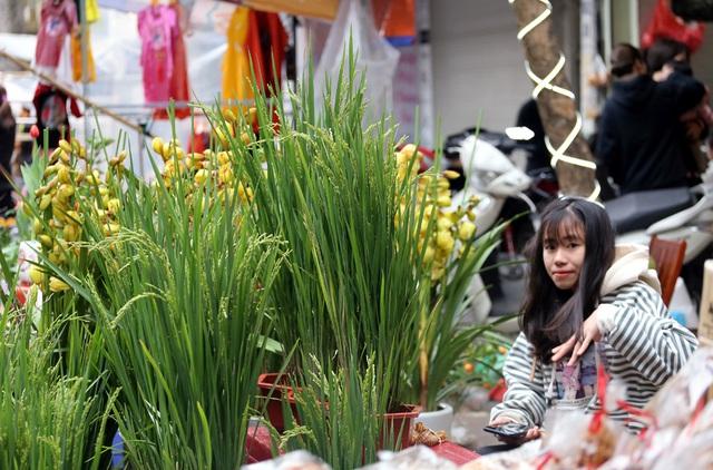 Khóm lúa xuân thì giá bằng 1kg thịt lợn đắt khách ở chợ hoa Hàng Lược - Ảnh 2.