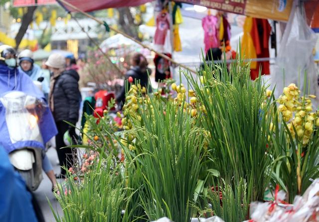 Khóm lúa xuân thì giá bằng 1kg thịt lợn đắt khách ở chợ hoa Hàng Lược - Ảnh 1.
