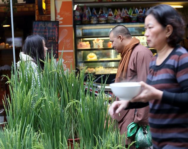 Khóm lúa xuân thì giá bằng 1kg thịt lợn đắt khách ở chợ hoa Hàng Lược - Ảnh 4.