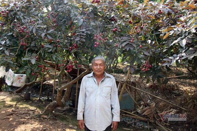 Cả vườn có 100kg nhãn tím, đánh ô tô xin mua nhưng bị từ chối - Ảnh 5.