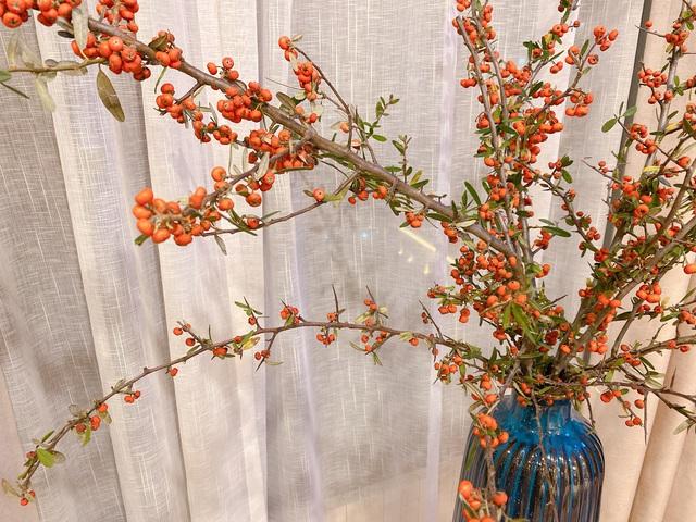 Bí quyết lựa chọn 4 loại hoa ngoại được chị em ưu chuộng nhất dịp Tết: Tuyết mai, Thanh liễu, Hồng gai và Đào đông - Ảnh 4.