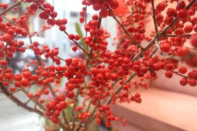 Bí quyết lựa chọn 4 loại hoa ngoại được chị em ưu chuộng nhất dịp Tết: Tuyết mai, Thanh liễu, Hồng gai và Đào đông - Ảnh 5.