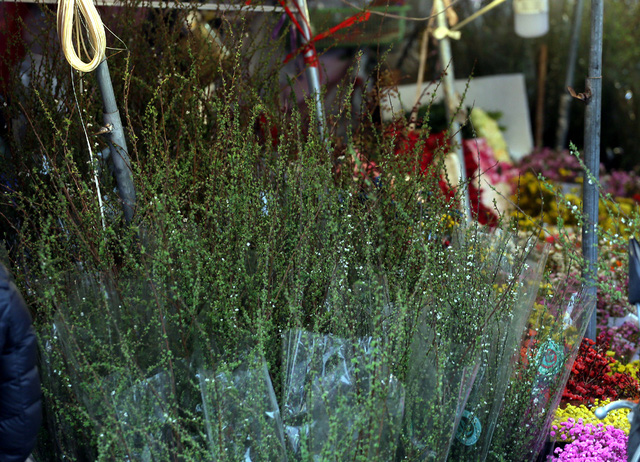 Đây là loài hoa khiến chị em điên đảo mua sắm dịp Tết cổ truyền  - Ảnh 2.