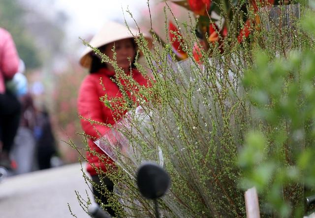 Đây là loài hoa khiến chị em điên đảo mua sắm dịp Tết cổ truyền  - Ảnh 4.