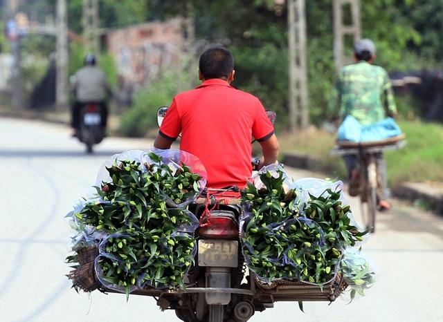 Hà Nội: Nông dân Tây Tựu tất bật thu hoạch hoa phục vụ Rằm tháng Chạp - Ảnh 2.