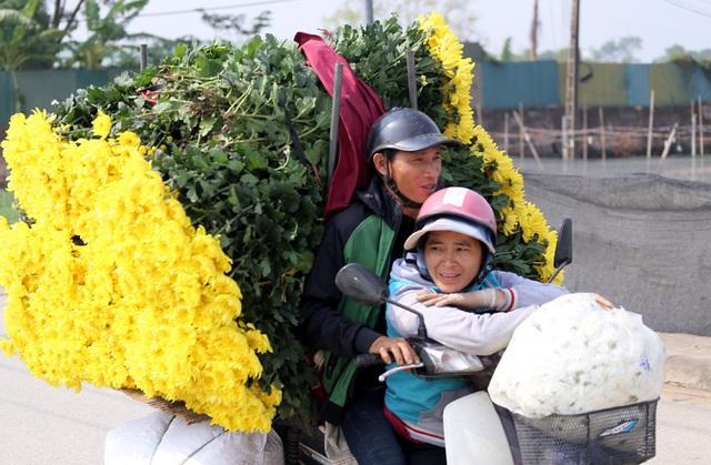 Hà Nội: Nông dân Tây Tựu tất bật thu hoạch hoa phục vụ Rằm tháng Chạp - Ảnh 9.
