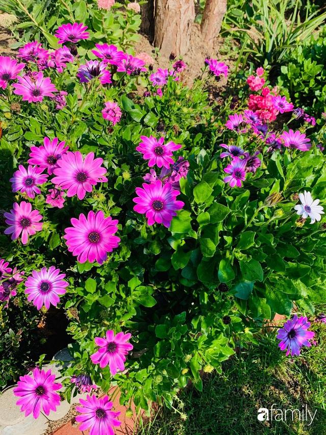 Vườn hoa 500m² đẹp như cổ tích được tạo bởi tình yêu thiên nhiên của cặp vợ chồng dành cả thanh xuân để trồng cây - Ảnh 17.