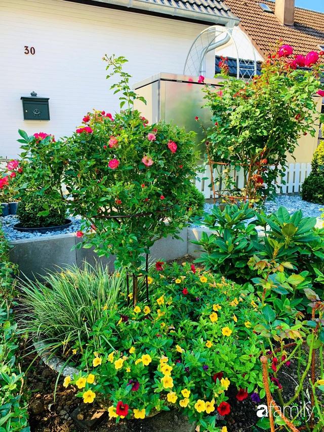 Vườn hoa 500m² đẹp như cổ tích được tạo bởi tình yêu thiên nhiên của cặp vợ chồng dành cả thanh xuân để trồng cây - Ảnh 20.