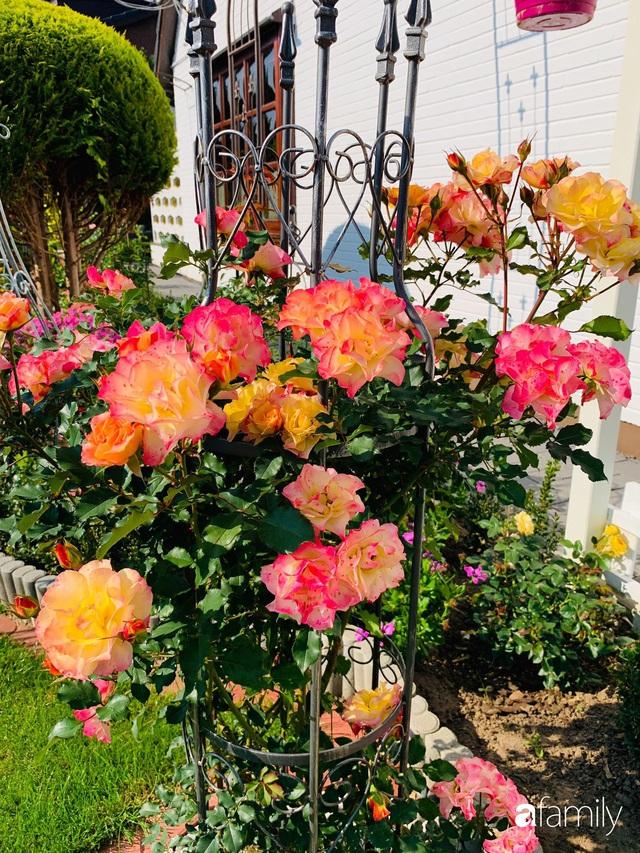 Vườn hoa 500m² đẹp như cổ tích được tạo bởi tình yêu thiên nhiên của cặp vợ chồng dành cả thanh xuân để trồng cây - Ảnh 21.