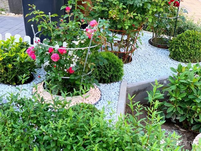 Vườn hoa 500m² đẹp như cổ tích được tạo bởi tình yêu thiên nhiên của cặp vợ chồng dành cả thanh xuân để trồng cây - Ảnh 10.