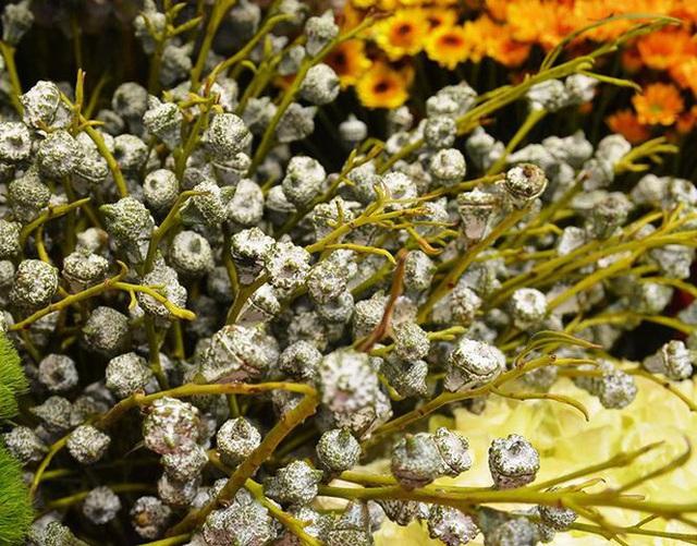 Tặng những loại hoa này đảm bảo vợ, bạn gái cũng phải ngỡ ngàng vì lạ - Ảnh 10.