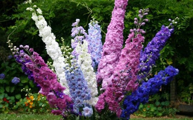 Tặng những loại hoa này đảm bảo vợ, bạn gái cũng phải ngỡ ngàng vì lạ - Ảnh 15.