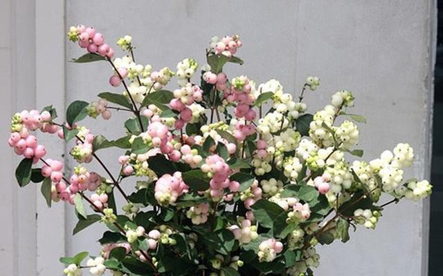 Tặng những loại hoa này đảm bảo vợ, bạn gái cũng phải ngỡ ngàng vì lạ - Ảnh 17.