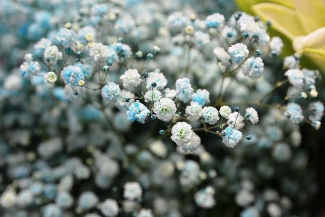 Tặng những loại hoa này đảm bảo vợ, bạn gái cũng phải ngỡ ngàng vì lạ - Ảnh 9.