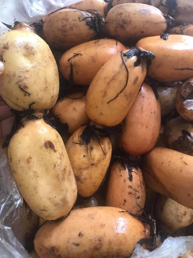 Chị bán hàng chợ dân sinh chỉ rõ 6 NÊN khi mua củ sen tươi cuối mùa để 10 củ thơm ngon như 10 - Ảnh 3.