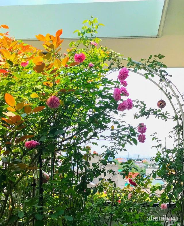 Sân thượng hoa hồng rực rỡ khoe sắc những ngày chớm thu của bà mẹ đảm ở Sài Gòn - Ảnh 2.