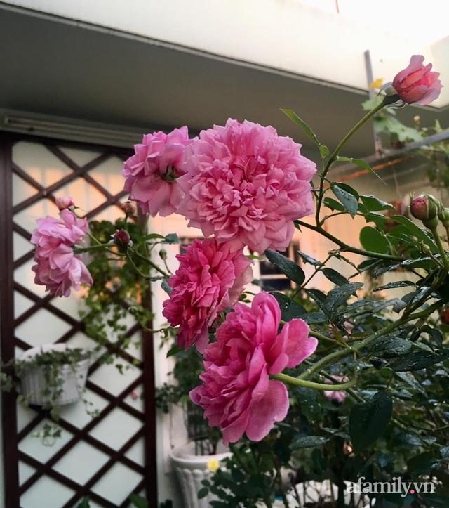 Sân thượng hoa hồng rực rỡ khoe sắc những ngày chớm thu của bà mẹ đảm ở Sài Gòn - Ảnh 8.