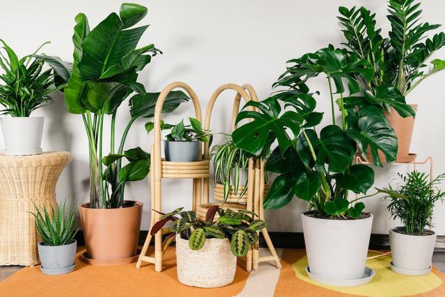 Sai lầm phổ biến khi trồng cây xanh trong nhà khiến cây bị úng, chết khô - Ảnh 3.