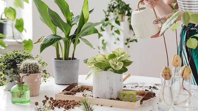 Sai lầm phổ biến khi trồng cây xanh trong nhà khiến cây bị úng, chết khô - Ảnh 2.