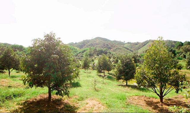 Khu vườn rộng gần 10.000 m2 bạt ngàn cây trái của Trà Ngọc Hằng - Ảnh 10.