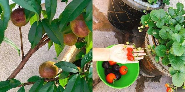 Phạm Hương chăm được một khu vườn trĩu quả bên Mỹ mà bất cứ nông dân thành phố nào cũng phải mê - Ảnh 4.