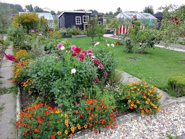Khu vườn trồng các loại rau và hoa đẹp như mơ của cặp vợ chồng trẻ yêu thiên nhiên - Ảnh 3.