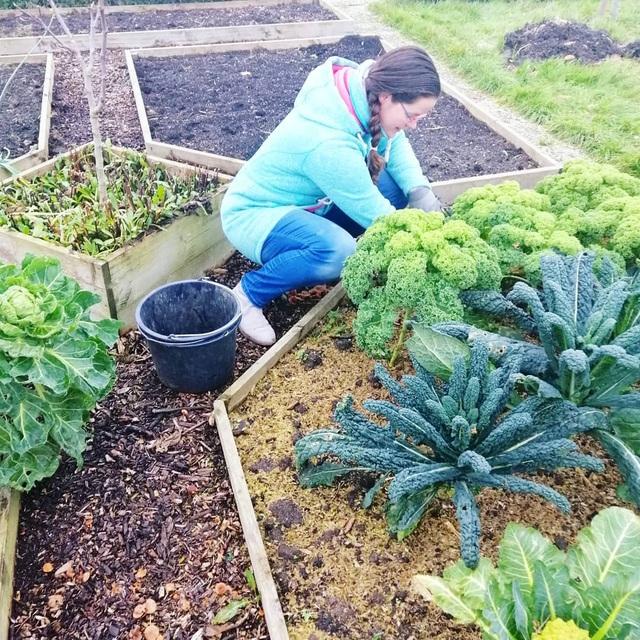 Khu vườn trồng các loại rau và hoa đẹp như mơ của cặp vợ chồng trẻ yêu thiên nhiên - Ảnh 12.