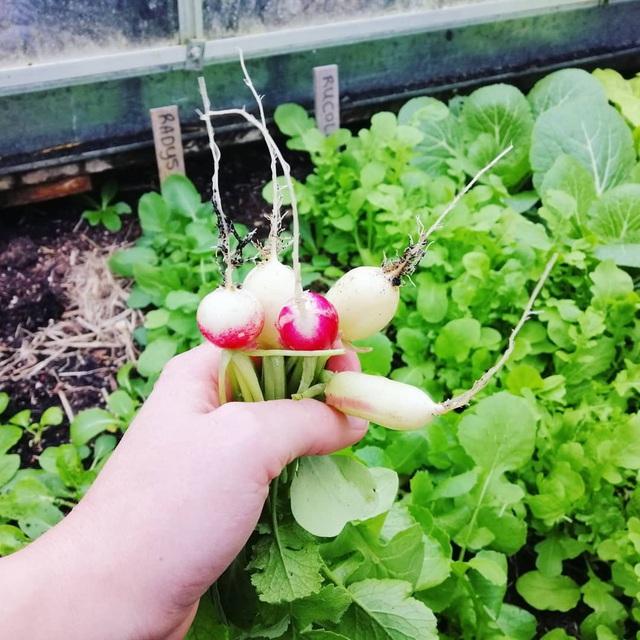 Khu vườn trồng các loại rau và hoa đẹp như mơ của cặp vợ chồng trẻ yêu thiên nhiên - Ảnh 16.