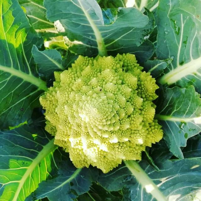 Khu vườn trồng các loại rau và hoa đẹp như mơ của cặp vợ chồng trẻ yêu thiên nhiên - Ảnh 20.