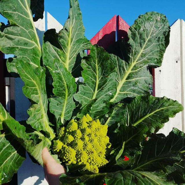 Khu vườn trồng các loại rau và hoa đẹp như mơ của cặp vợ chồng trẻ yêu thiên nhiên - Ảnh 21.
