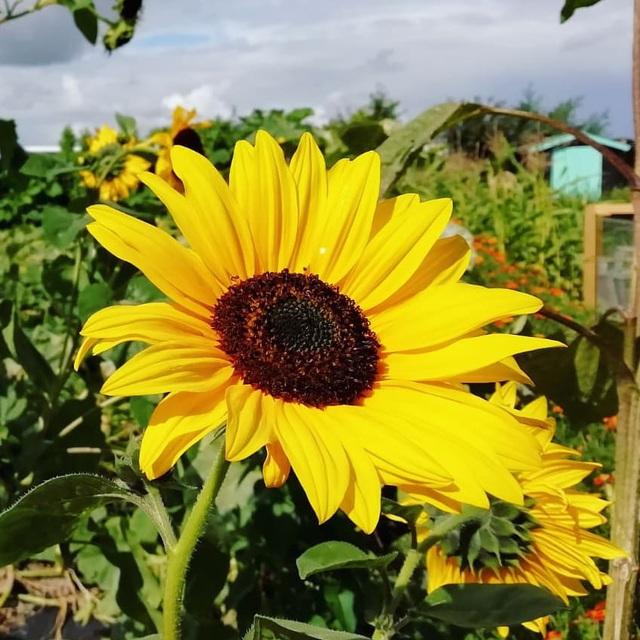 Khu vườn trồng các loại rau và hoa đẹp như mơ của cặp vợ chồng trẻ yêu thiên nhiên - Ảnh 27.