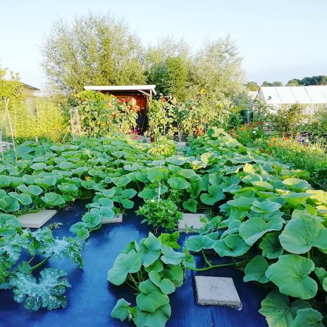 Khu vườn trồng các loại rau và hoa đẹp như mơ của cặp vợ chồng trẻ yêu thiên nhiên - Ảnh 28.