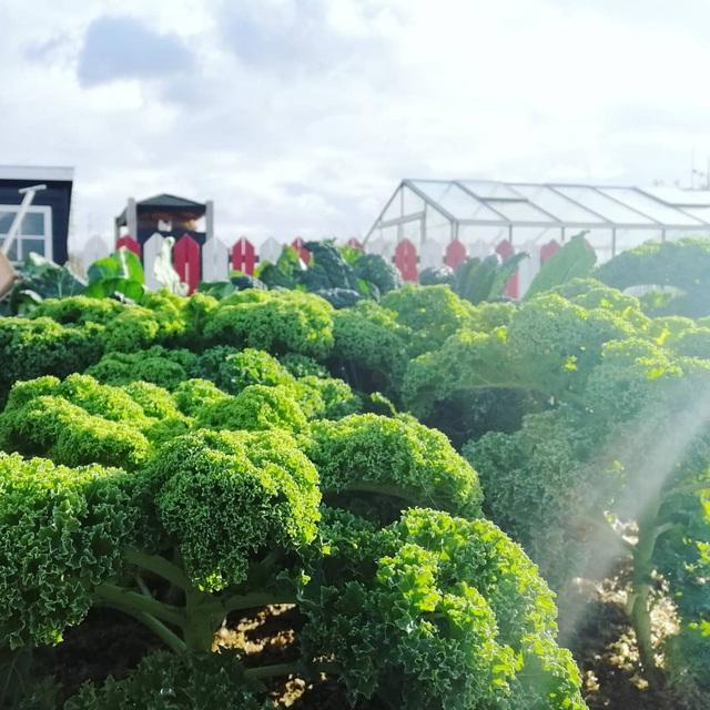 Khu vườn trồng các loại rau và hoa đẹp như mơ của cặp vợ chồng trẻ yêu thiên nhiên - Ảnh 29.