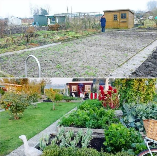 Khu vườn trồng các loại rau và hoa đẹp như mơ của cặp vợ chồng trẻ yêu thiên nhiên - Ảnh 5.