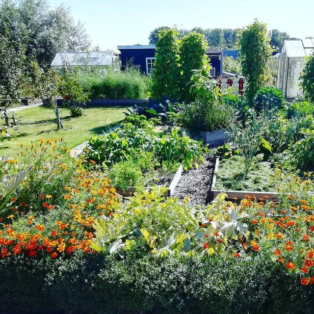 Khu vườn trồng các loại rau và hoa đẹp như mơ của cặp vợ chồng trẻ yêu thiên nhiên - Ảnh 32.