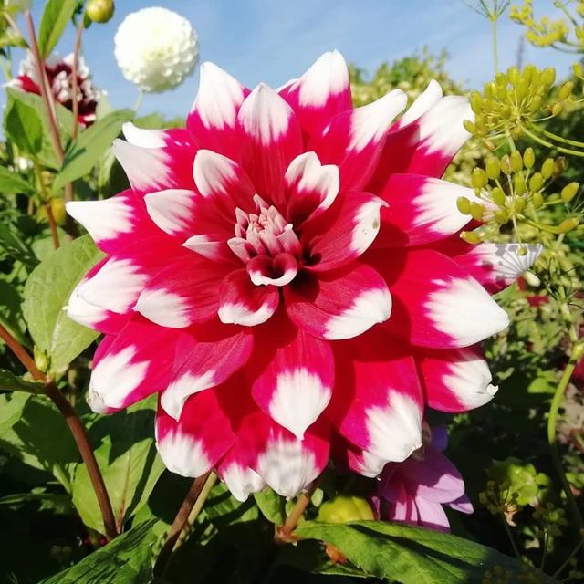 Khu vườn trồng các loại rau và hoa đẹp như mơ của cặp vợ chồng trẻ yêu thiên nhiên - Ảnh 33.