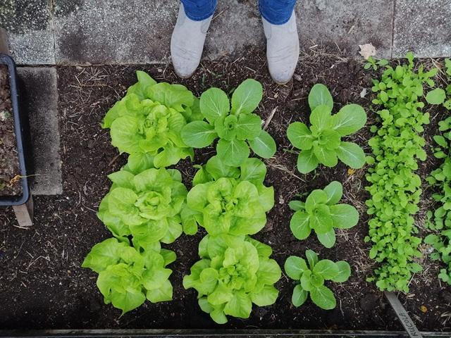Khu vườn trồng các loại rau và hoa đẹp như mơ của cặp vợ chồng trẻ yêu thiên nhiên - Ảnh 7.