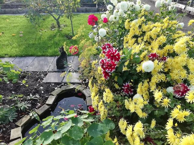 Khu vườn trồng các loại rau và hoa đẹp như mơ của cặp vợ chồng trẻ yêu thiên nhiên - Ảnh 9.