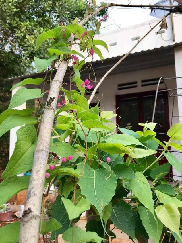 Kiều Trinh thu hoạch mỏi tay sau một năm làm vườn ở Bình Phước - Ảnh 2.