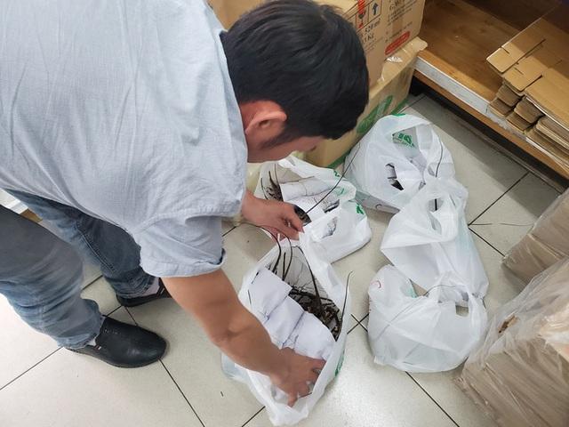 Giải cứu tôm hùm ở Hà Nội: Hàng đồng giá 299.000 đồng/con cháy hàng - Ảnh 5.