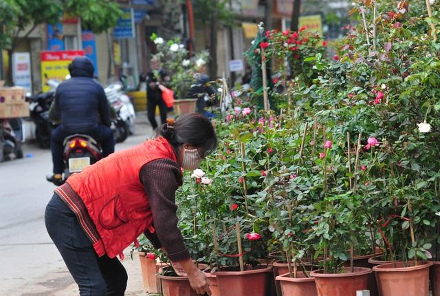 Độc đáo phiên chợ hoa, cây cảnh năm ngày họp một lần tại Hà Nội - Ảnh 1.
