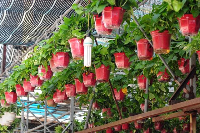 Độc đáo phiên chợ hoa, cây cảnh năm ngày họp một lần tại Hà Nội - Ảnh 3.