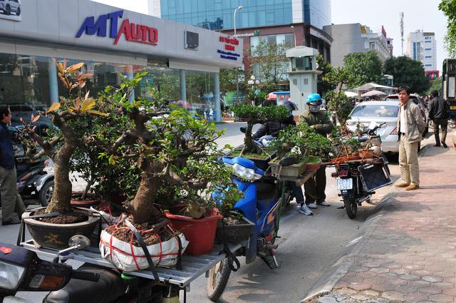 Độc đáo phiên chợ hoa, cây cảnh năm ngày họp một lần tại Hà Nội - Ảnh 8.